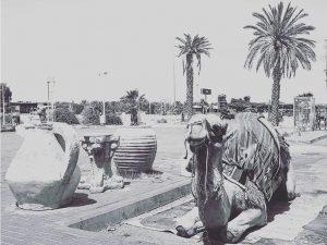 Camel Ride in Jericho